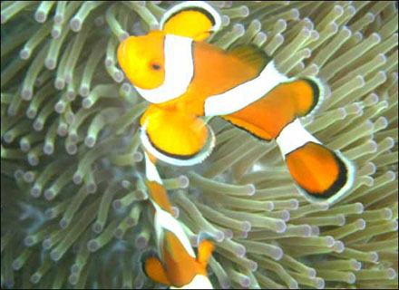 Tropical Fauna Andaman and