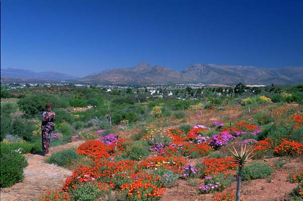 Worcester South Africa  city photo : ... gardens, Worcester, Western Cape province, South Africa photo